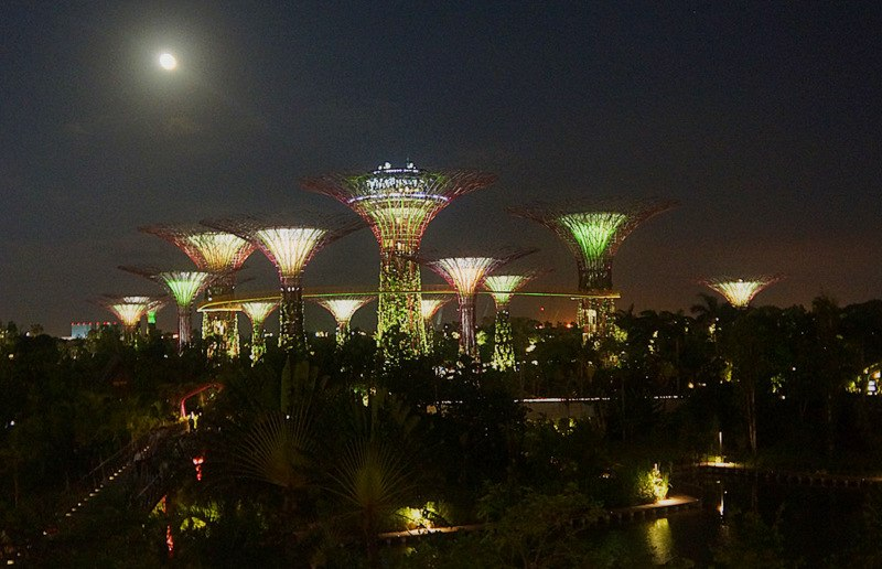 Супердеревья в Gardens by the Bay вечером